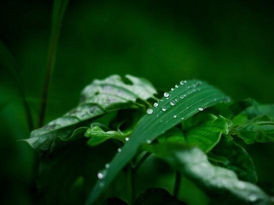 Прокл Плакальщик: календарь садовода на 25 июля