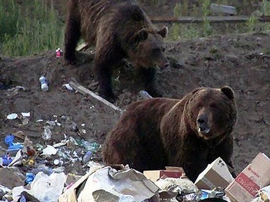 В камчатской глубинке медведь загрыз человека возле свалки
