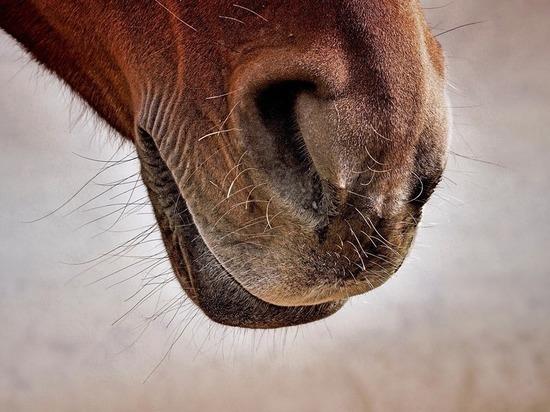 В Карачаево-Черкесии у конокрадов изъяли чужого коня