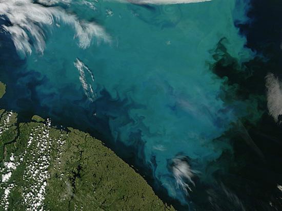 Началось аномальное цветение северных морей России