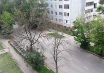 В Калуге деревья уничтожают насекомые