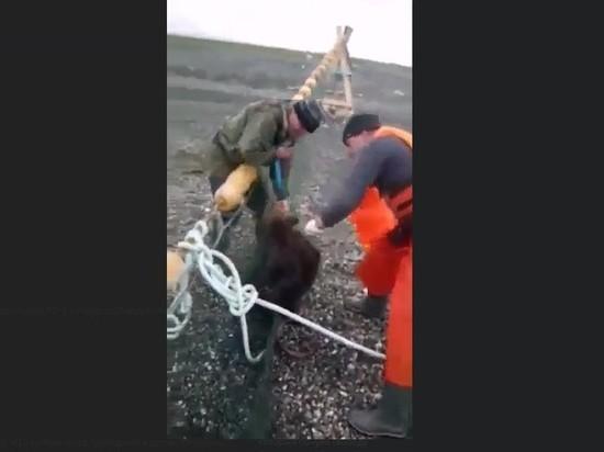 На Сахалине рыбаки спасли медвежонка, запутавшегося в сетях