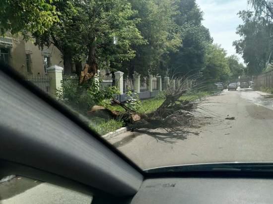 В Твери дерево упало на проезжую часть возле Суворовского училища
