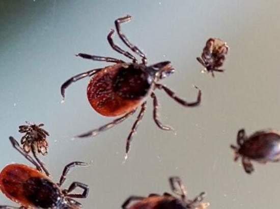 На Дону более 3 тысяч человек пострадали от укусов клещей