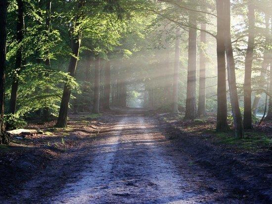 Пропавшего липчанина нашли мёртвым в лесу