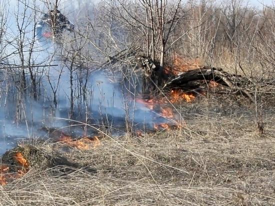 В Липецкой области ожидается высокая пожароопасность лесов