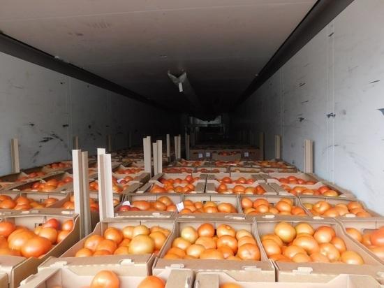 Опасного вредителя нашли в томатах, которые хотели ввезти в Псковский регион