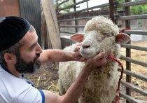 Как мусульмане в Новосибирске отметят праздник жертвоприношения