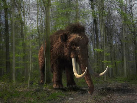 В Салехарде появился желающий продать бивни и кости мамонта