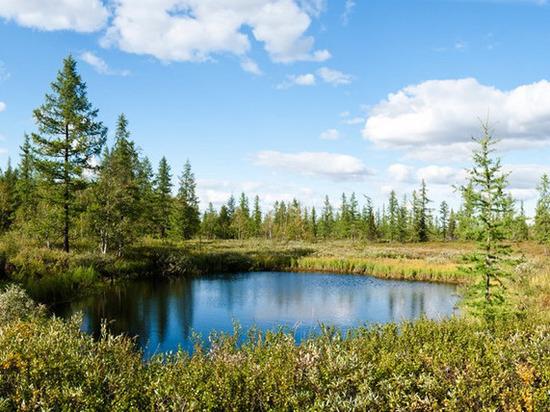 Леса для жителей Ямала «закрыли» до 19 августа