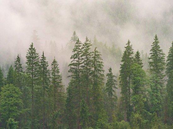 Забайкалка вывезла за границу древесину на 3 млн рублей