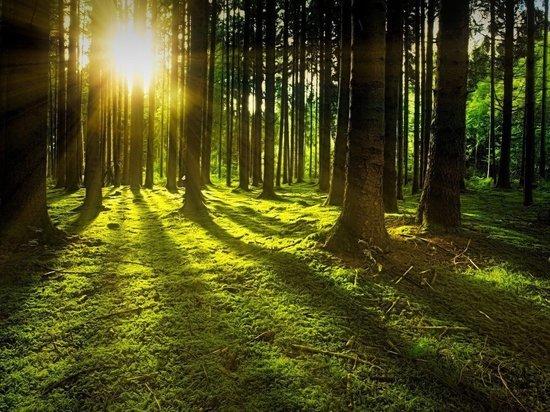 На Ямале нет лесных пожаров