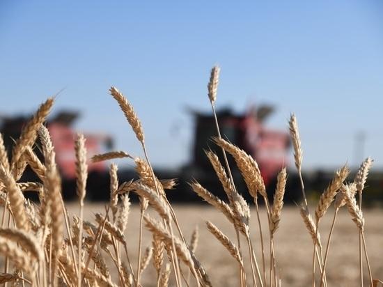 Андрей Бочаров сообщил о выполнении плана заготовки зерна