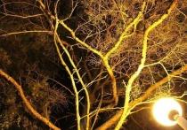 В Протвино убрали часть фонарей