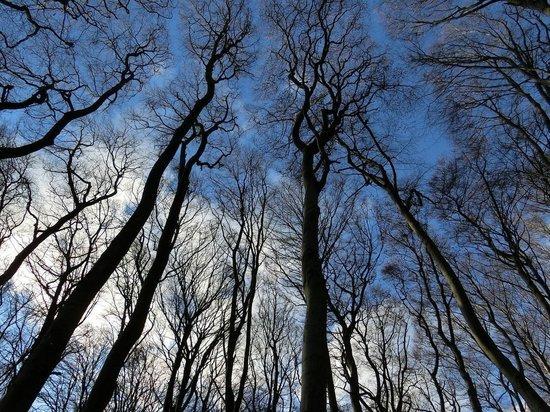 Двух женщин второй день ищут в лесу в Куньинском районе