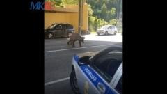 В Сочи к посту ГАИ из леса вышел медведь
