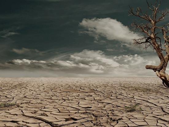 Планета плавится от невыносимой жары, ВОЗ рекомендует оставаться дома