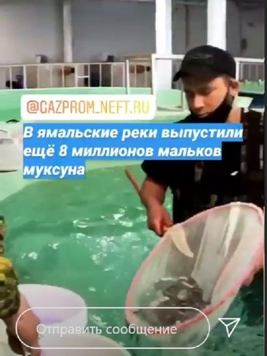 В реки Ямала выпустили еще 8 млн мальков муксуна