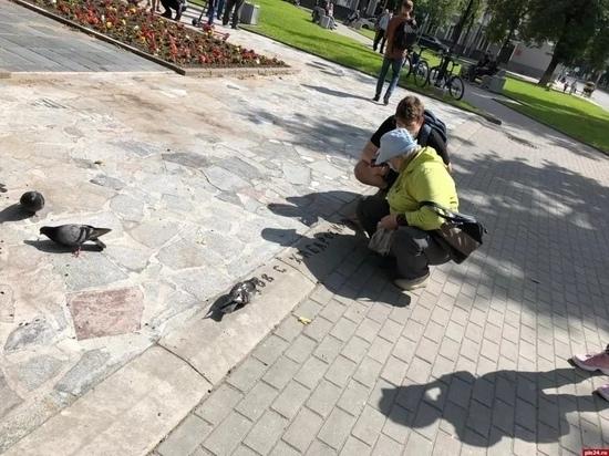 В поддержку хабаровчан в Пскове покормили голубей