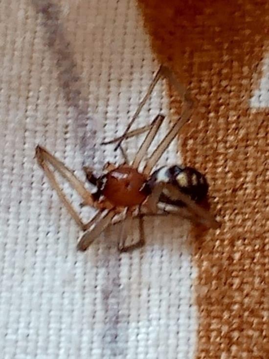 Здоровью ребенка, которого укусил неизвестный паук в Твери, ничего не угрожает