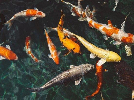 Неизвестные рыбы напали на купающихся у берегов Франции