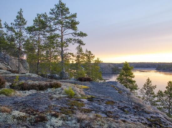 На Ямале не выявили новые лесные пожары
