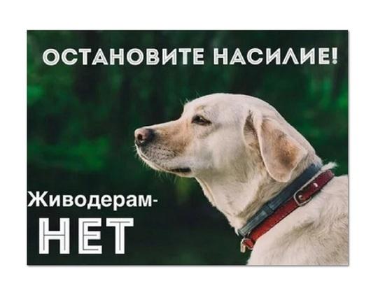 В Иваново жители просят найти управу на живодеров
