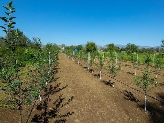 Яблоневые сады вырастят в Хабезском районе Карачаево-Черкесии