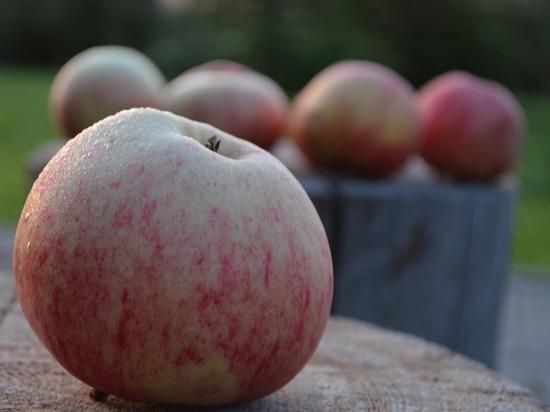 В Суздале пройдет празднование Яблочного Спаса