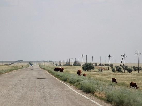 В Калмыкии дороги строят до отдаленных поселков