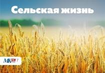 В рамках проекта «Сельская жизнь» «МК в Пскове» расскажет подробнее об особенностях псковского сельхозбизнеса