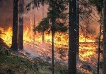 При каких условиях за непотушенный костер в лесу можно угодить в тюрьму, а когда удастся отделаться штрафом, разъяснило МЧС