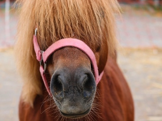 Афера с мертвой пони в Казани обернулась домашним арестом мошенницы