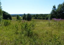 Еще 8 лет назад руководство поселка Святозеро в Пряжинском районе разрешило строить коттеджи на бывшем совхозном поле
