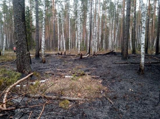 Лесные пожары в Марий Эл тушат в первые сутки