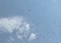 «Горячей воды им не дали»: в Улан-Удэ над ТЭЦ скопилось множество птиц