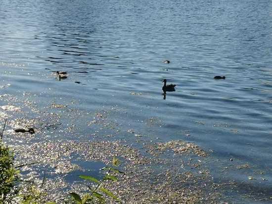 Озеро на Сортировке в Нижнем Новгороде стало памятником природы
