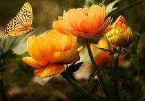 В Чехове пройдет путешествие в мир цветов