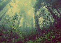 Волонтеры поисково-спасательного отряда нашли живым пенсионера-десантника, несколько дней выживающего в лесу в Тверской области
