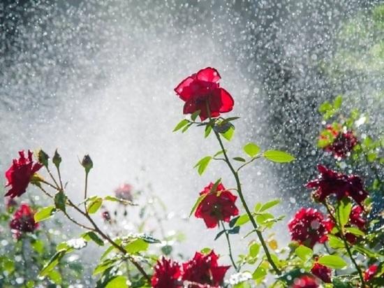 Волгоградцев 8 августа ожидают небольшие дожди с грозами