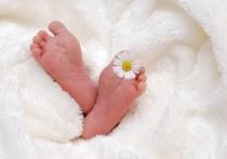 В Калуге родились Мирон и Анисия