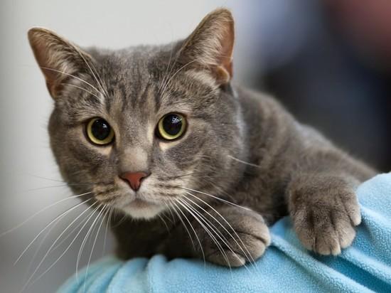 В Великобритании хозяева нашли пропавшую кошку через 12 лет