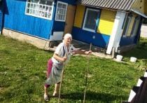 Наши спецкоры, работающие на выборах президента Белоруссии, выехали из Минска, чтобы посмотреть, какие настроения царят в деревнях, что стало с электоратом Лукашенко – пенсионерами, и каким образом независимые наблюдатели следят за выборами, которые проходят в зданиях сельсовета