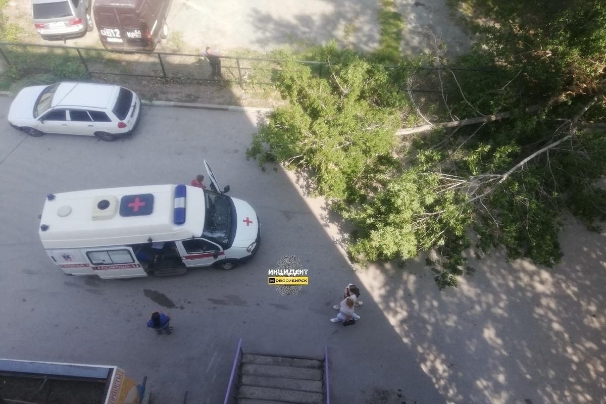 В Новосибирске старый клен упал на пенсионерку - МК ...