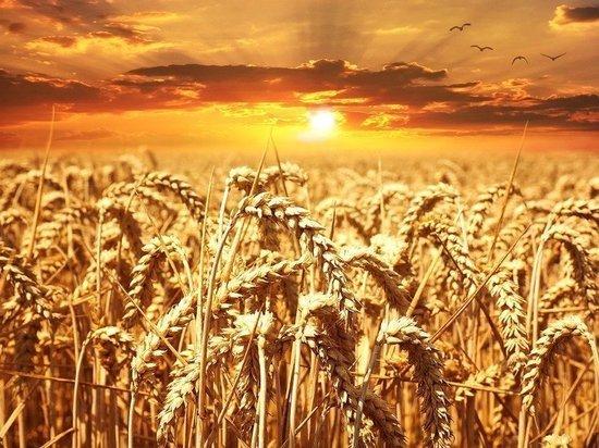 В Белгородской области начнет работу высокоэффективный элеватор для хранения зерна