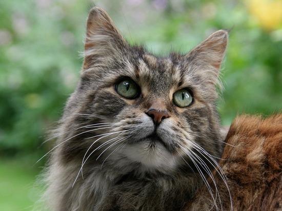Каких кошек волгоградцы могут спокойно купать