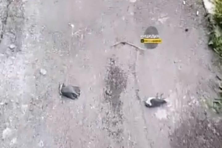 Десятки мертвых птиц: находка во дворе дома шокировала ...