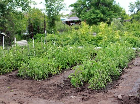 Этот простой продукт, спасающий от рака, растет в каждом огороде
