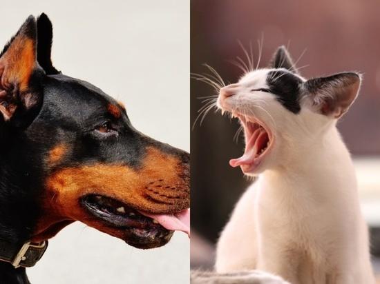 Ученые нашли способ прекратить конфликты между кошками и собаками