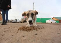 Собака бывает кусачей: исполняется ли закон о гуманности к животным в Иркутской области